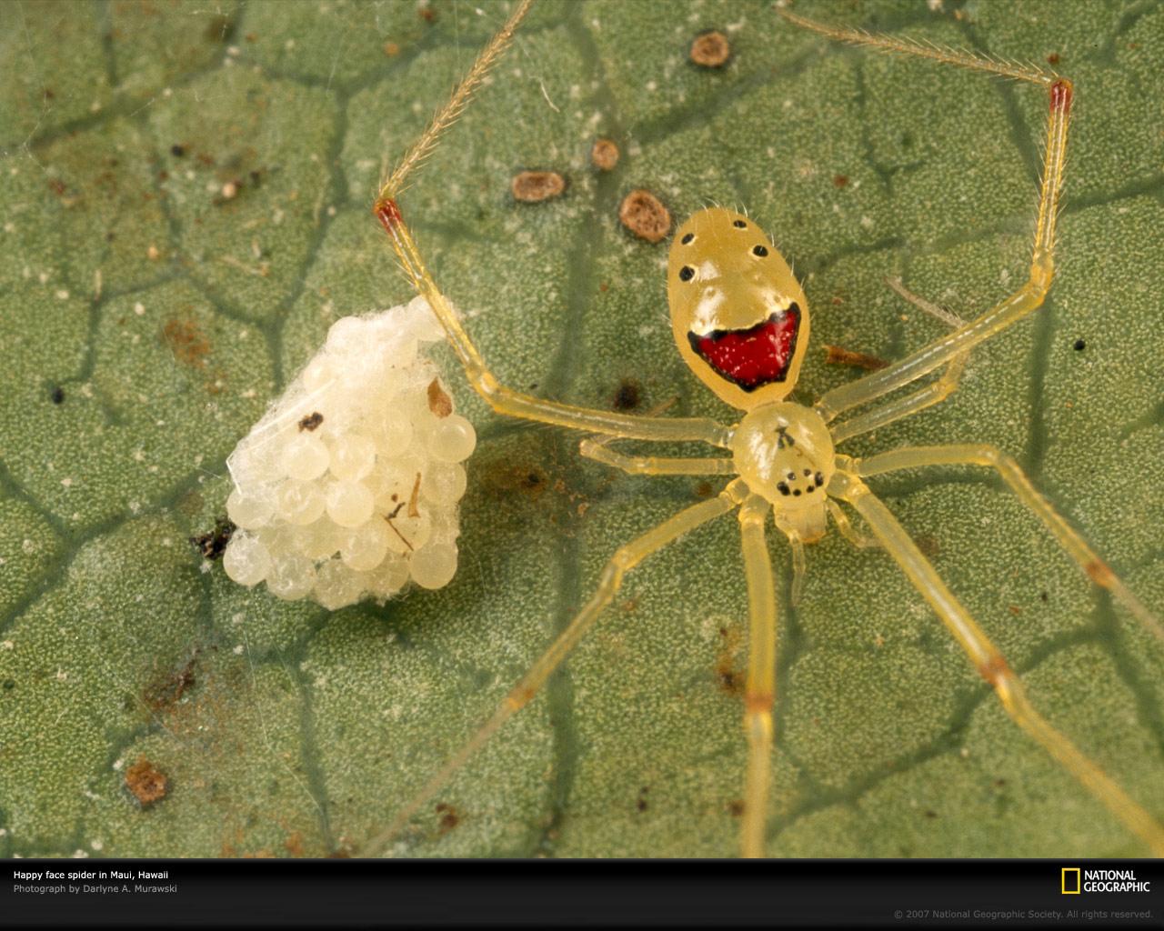 Spider smile